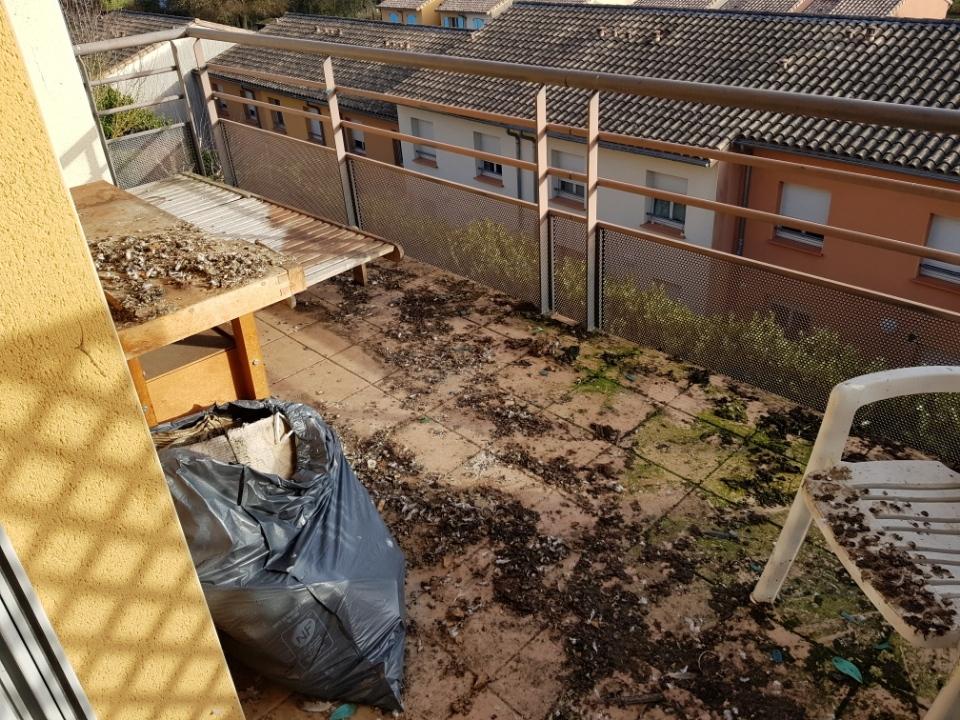 habitation impacté par les pigeons 4.jpg
